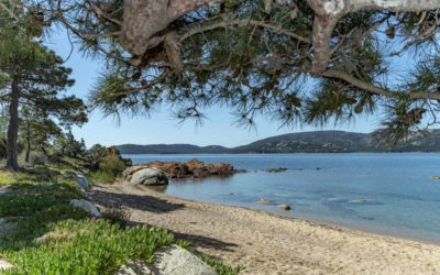 AVALON EVENTS ORGANISATION RECOMMENDS CORSICA